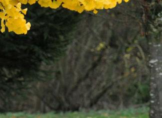 Estudar no exterior | Foto: University of the Fraser Valley, via Flickr