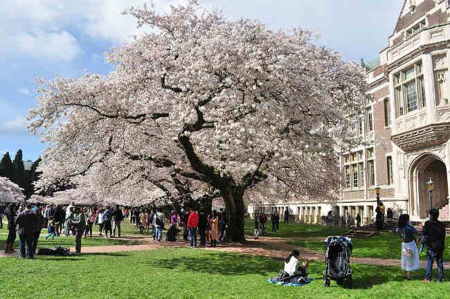 Estudar no exterior | University of Washington | Foto: Joe Mabel, via Wikimedia Commons